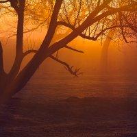 Как-то очень ранним утром... :: Roman Lunin