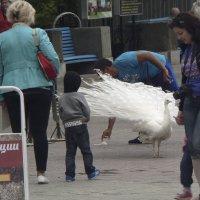 необычный пешеход :: Мария Климова