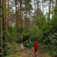 Выход в лес :: Сергей Банков
