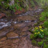 Лесной ручей :: Эдуард Ефремов