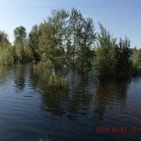 деревья в воде :: МИХАИЛ КАТАРЖИН
