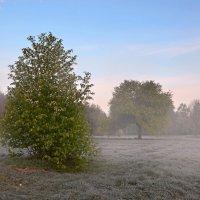 Морозное утро :: владимир иванов