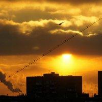 Интернет-кабель и городской закат :: Александр Орлов