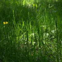 Солнечный лучик заблудился в траве :: Алексей Гончаров