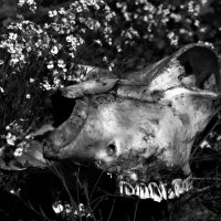 bone :: Katy Efremowa