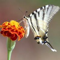 Бабочка :: Владимир Онищенко