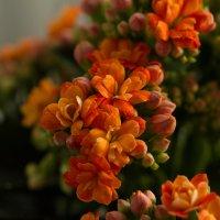 мой первый цветочек :: Ольга Киселева