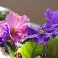 Аномалия в цвете :: Дмитрий Тулупов