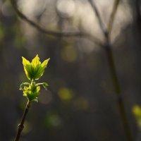 Весна :: Екатерина Марфута