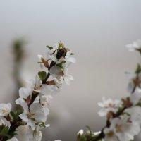 Весна :: NюRа;-) Ковылина
