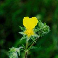 Сердце красавицы :: Olga Zhuravel