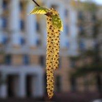 Петербургская весна :: Михаил Лесин