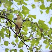 Измайловский парк. 8 мая 2014 года. ... а, соловей. Ах, как он пел ... и тишина ему внимала. :: Геннадий Александрович