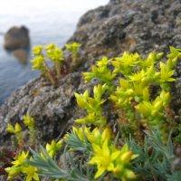 цветы на скалах :: Андрeй Владимир-Молодой