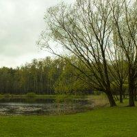 Весна пришла :: Sergey Lebedev