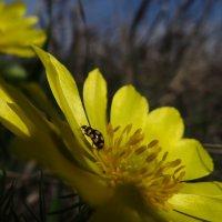 Весна в желтом:) :: Виктория Скупова