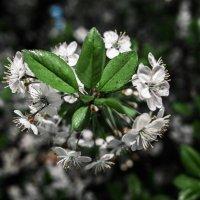 Весна :: Рома Фабров