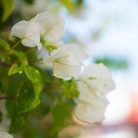 Цветы :: Катерина Фомичева