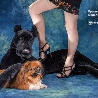 Собачья жизнь в студии :: Ринат Валиев