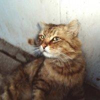 Вольяжный кот!) :: Света Кондрашова