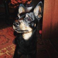 Верный пёс :: Света Кондрашова