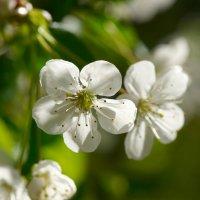 весна :: Валерий