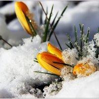 Весна. :: Иван Клещин