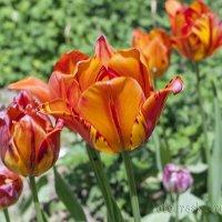 Весенние краски... :: Елена Васильева