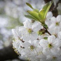 Весна**** :: Евгений Пятов