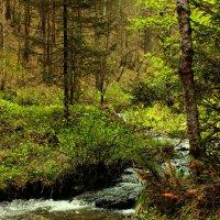 в сказочном лесу :: Светлана Тихонова