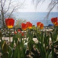 Просто Весна... :: Владимир Старовойтов