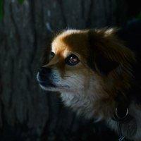 собака бывает кусачей, только от жизни собачей.. :: Elenn S