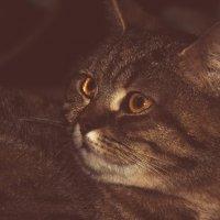 Кошка :: Саша Хмелёвская