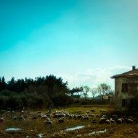 Греческие пасторали :: алексей афанасьев