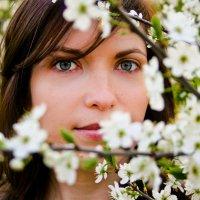 цветение вишни :: Анна Добрачёва