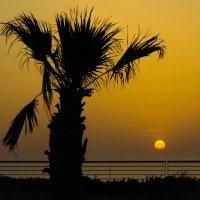 одинокая пальма :: Karina Strionova