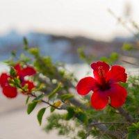 Цветок :: Катерина Фомичева