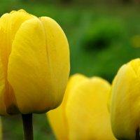 Цветочки-подружки :: Владимир Гилясев
