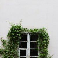Window :: Макс Липовецкий