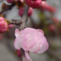 лучи весны :: Юля Гайдук