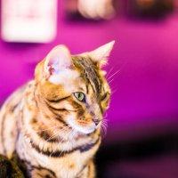Кошка :: Иван Загайнов