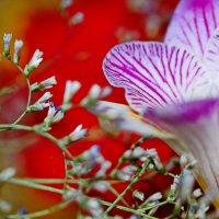 цветочная мозаика :: valeriy g_g