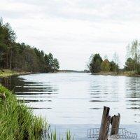 Берег реки :: Дмитрий Колесников
