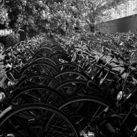 very many bikes :: Dmitry Ozersky