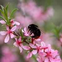 весна :: Лидия Юсупова