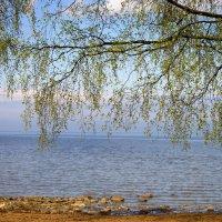 Изюминка к Финскому заливу. :: ФотоЛюбка *