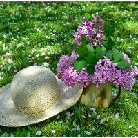 Хорошо то как летом) :: Мария Богуславская