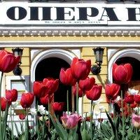 Тюльпаны :: Павел Зюзин