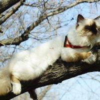 Кошачье счастье. :: Светлана Мурзина