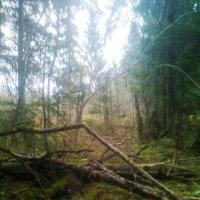 Наш лес :: Аверьянов Александр